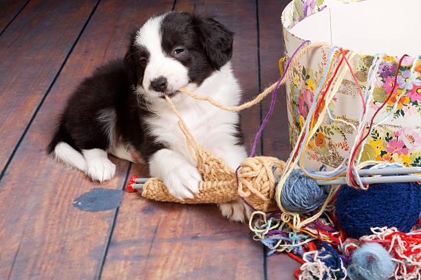 Knitting puppy stock photo
