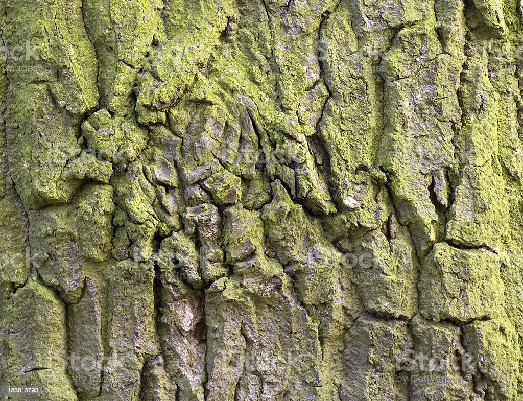 Knobbly bark background royalty-free stock photo