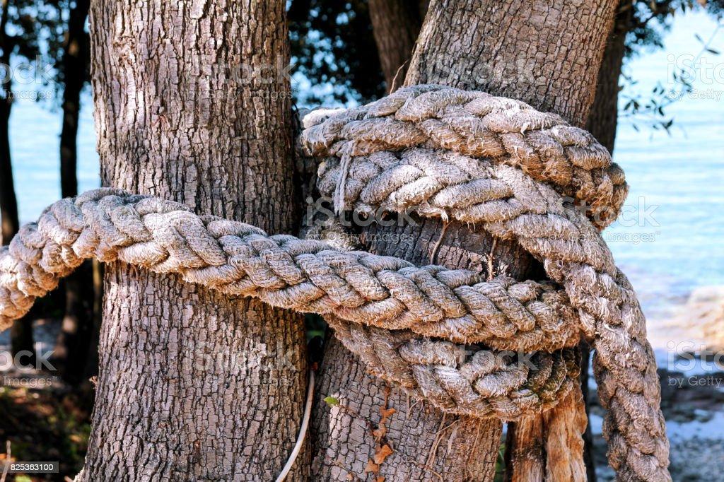 Uma corda atada em uma grande árvore. Macro, escalada de corda branca amarrado a uma árvore grande. Corda em torno do tronco de árvore, corda com nó à volta da árvore. Fundo de mar e ambiente natural bonito, viagens, dia ensolarado. foto royalty-free