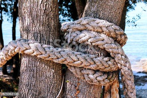 Foto de Uma Corda Atada Em Uma Grande Árvore Macro Escalada De Corda Branca Amarrado A Uma Árvore Grande Corda Em Torno Do Tronco De Árvore Corda Com Nó À Volta Da Árvore Fundo De Mar E Ambiente Natural Bonito Viagens Dia Ensolarado e mais fotos de stock de Amarrando
