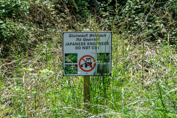 knotweed warning sign, ireland. - japanese knotweed stock pictures, royalty-free photos & images
