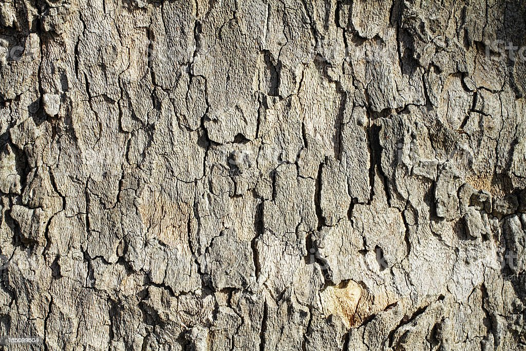 Soft-toned contoured bark of London plane tree stock photo