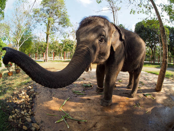 Koh Chang Elephant wide angle Koh Chang Elephant wide angle in Thailand koh chang stock pictures, royalty-free photos & images