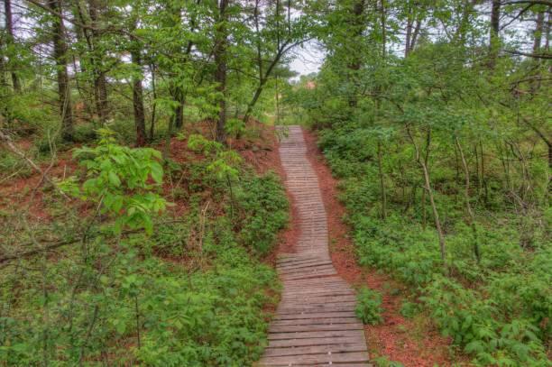 kohler-andrea state park am lake michigan im sommer - own wilson stock-fotos und bilder