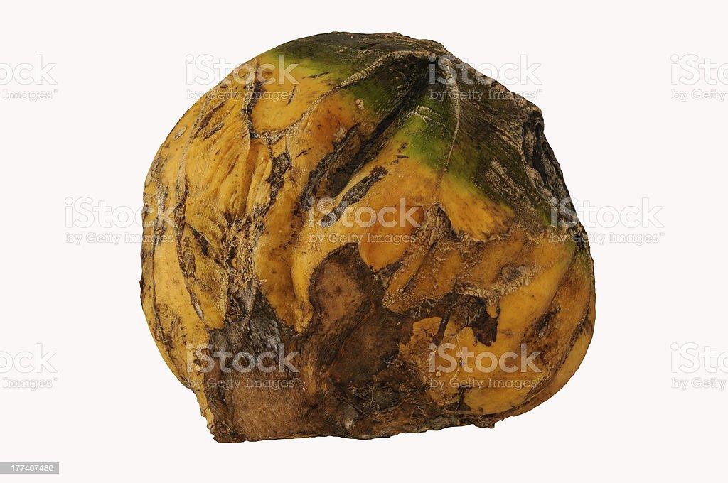 kohlrabi or turnip cabbage royalty-free stock photo