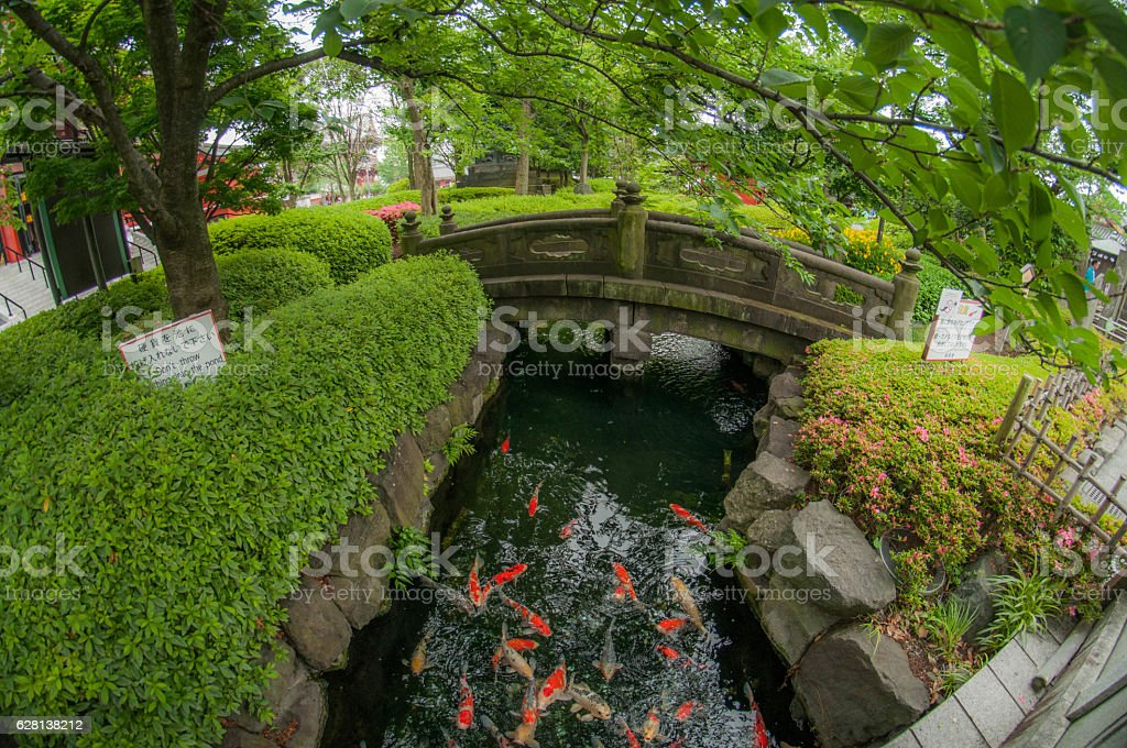 Koi Carp Pond stock photo