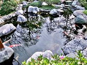 The Chinese traditional style small family garden with tropical plant and colorful koi fish pond.
