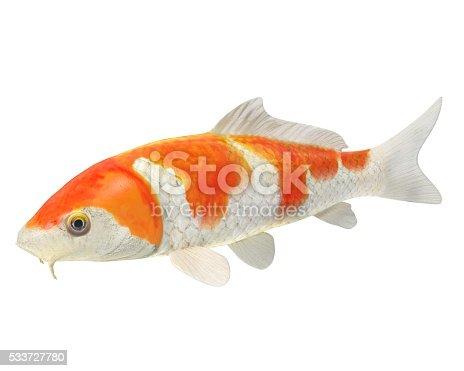 Peces koi fotograf a de stock y m s im genes de animal - Peces koi precio ...