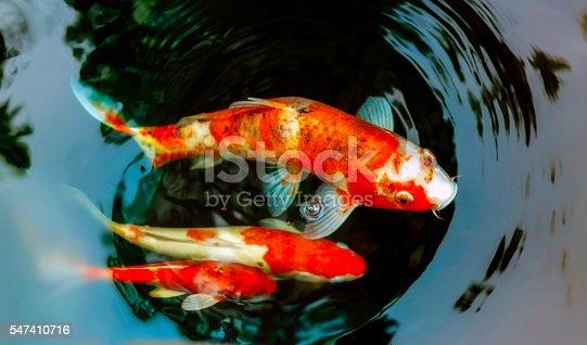 istock Koi fish 547410716