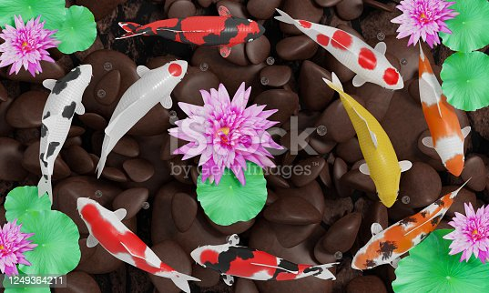 1140293905 istock photo Koi or fancy koi fish swim in a circle. Conveys good fortune in feng shui. Fish swimming in a lotus pond With pink lotus flowers The pond floor is a river rock. 3D Rendering 1249364211