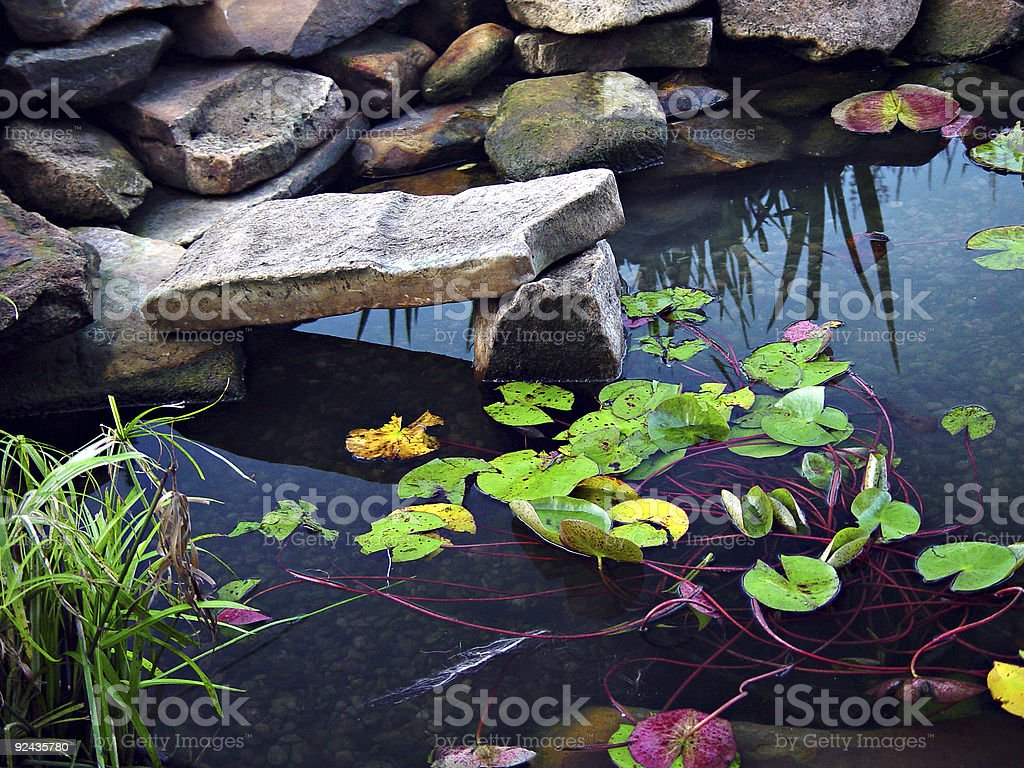 Koi Pond royalty-free stock photo