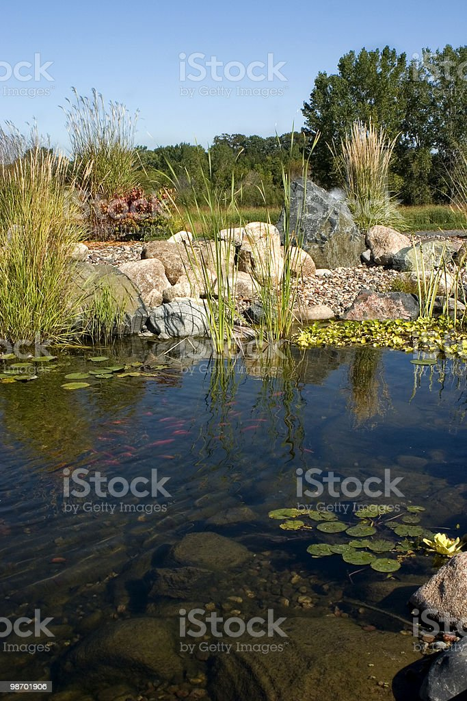 Koi Pond royalty-free stock photo