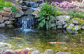 Koi swim down stream past waterfall surrounded by flowers and greenery