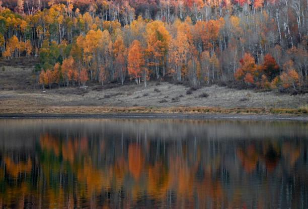 Kolob Autumn stock photo