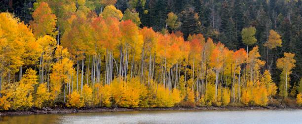 Kolob Reservoir Autumn stock photo