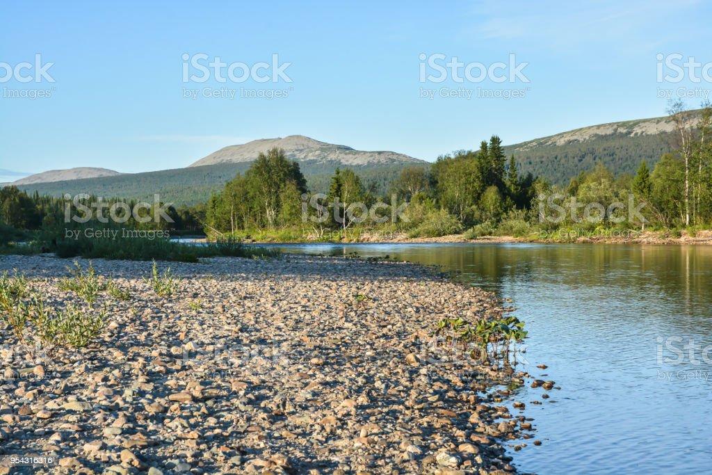 Komi virgin forests. stock photo
