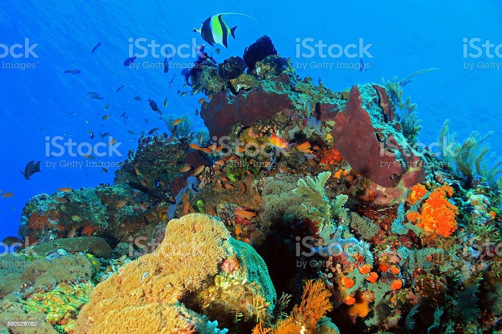 Komodo Coral Reef bildbanksfoto