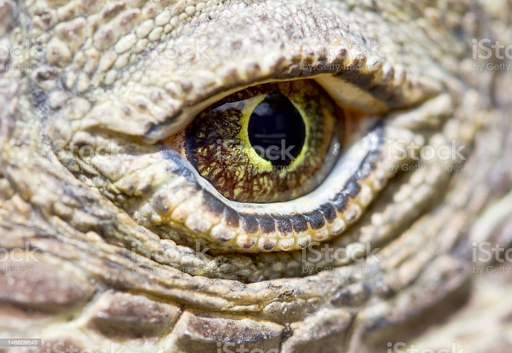 Komodo dragon eye stock photo