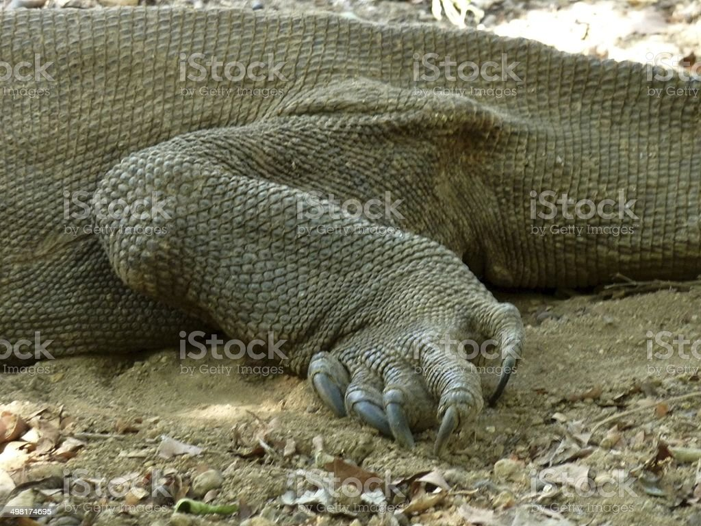 Komodo Dragon Hind Leg Stock Photo & More Pictures of Animal | iStock