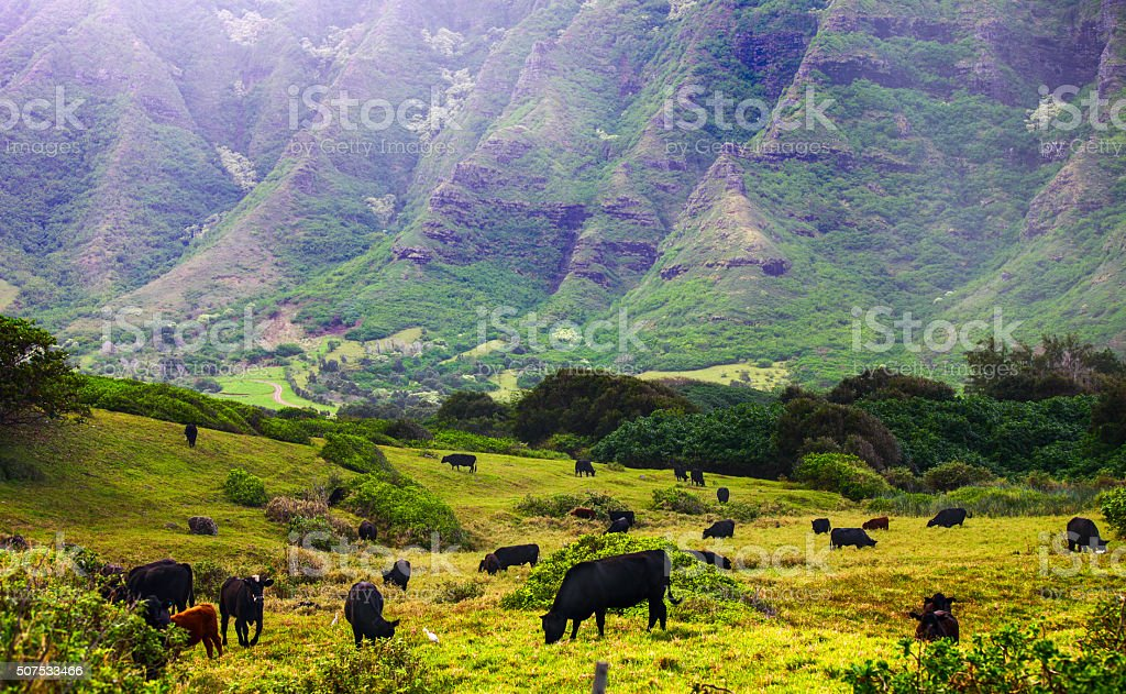 Ko'olau Mountain Range, Oahu stock photo