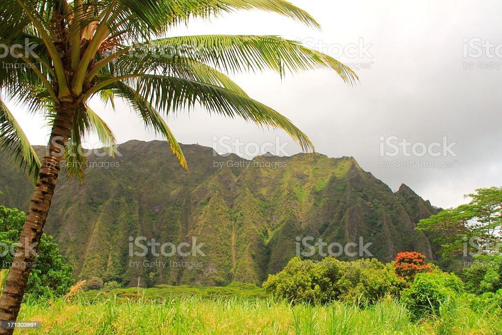 Koolau Mountains and palm tree on Oahu Hawaii stock photo