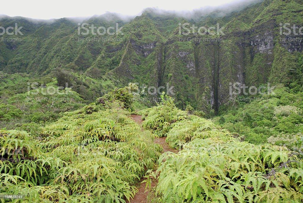 Koolau Mountains Hiking Trail, Hawaii stock photo
