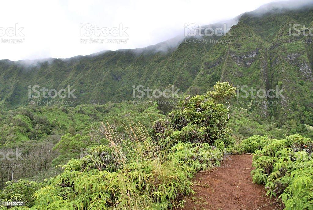 Koolau Mountains Hiking Trail, Hawaii royalty-free stock photo