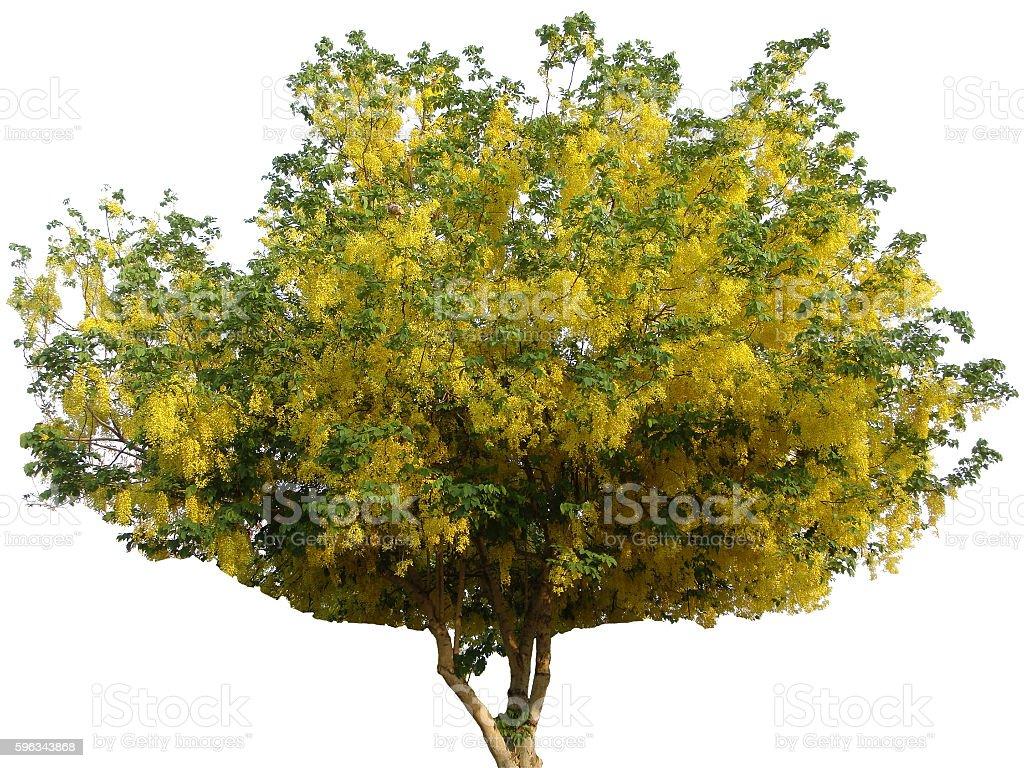 koon yellow leaf sheath on white background Lizenzfreies stock-foto