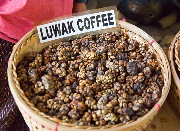 kopi luwak is a rare coffee. i drank in bali. - gato civeta fotografías e imágenes de stock