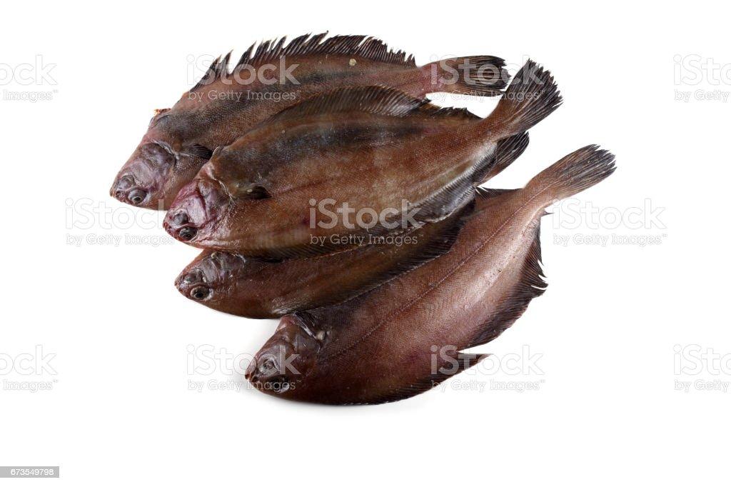 Korean flounder royalty-free stock photo