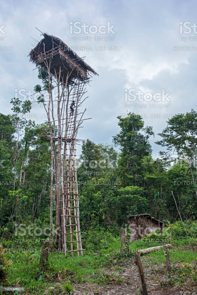 Korowai Man Climbing His Tree House Westpapua Indonesia Stock Photo Download Image Now Istock