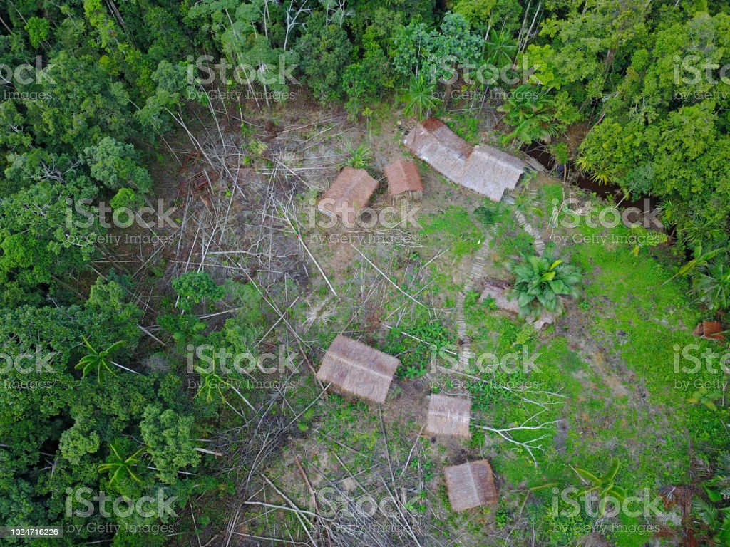 Korowai Tree House In A Jungle Clearing Westpapua Indonesia Stock Photo Download Image Now Istock