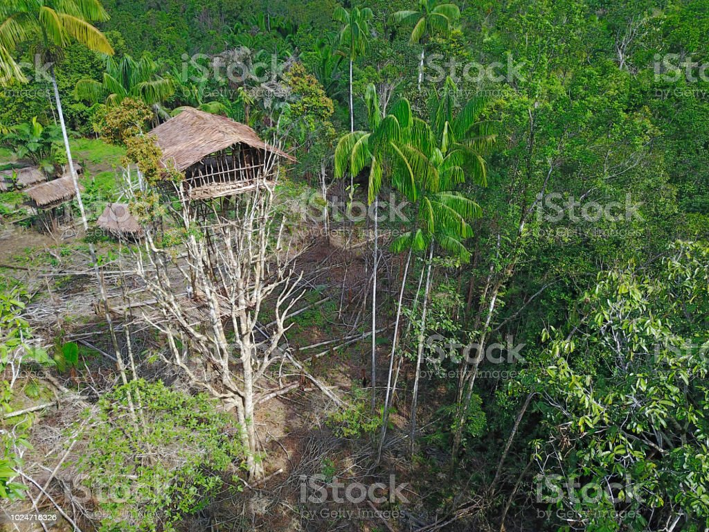 Picture of: Korowai Tree House In A Jungle Clearing Westpapua Indonesia Stock Photo Download Image Now Istock