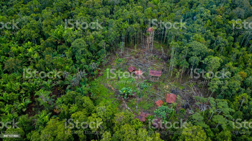 Picture of: Korowai Tree Houses In A Jungle Clearing Westpapua Indonesia Stock Photo Download Image Now Istock