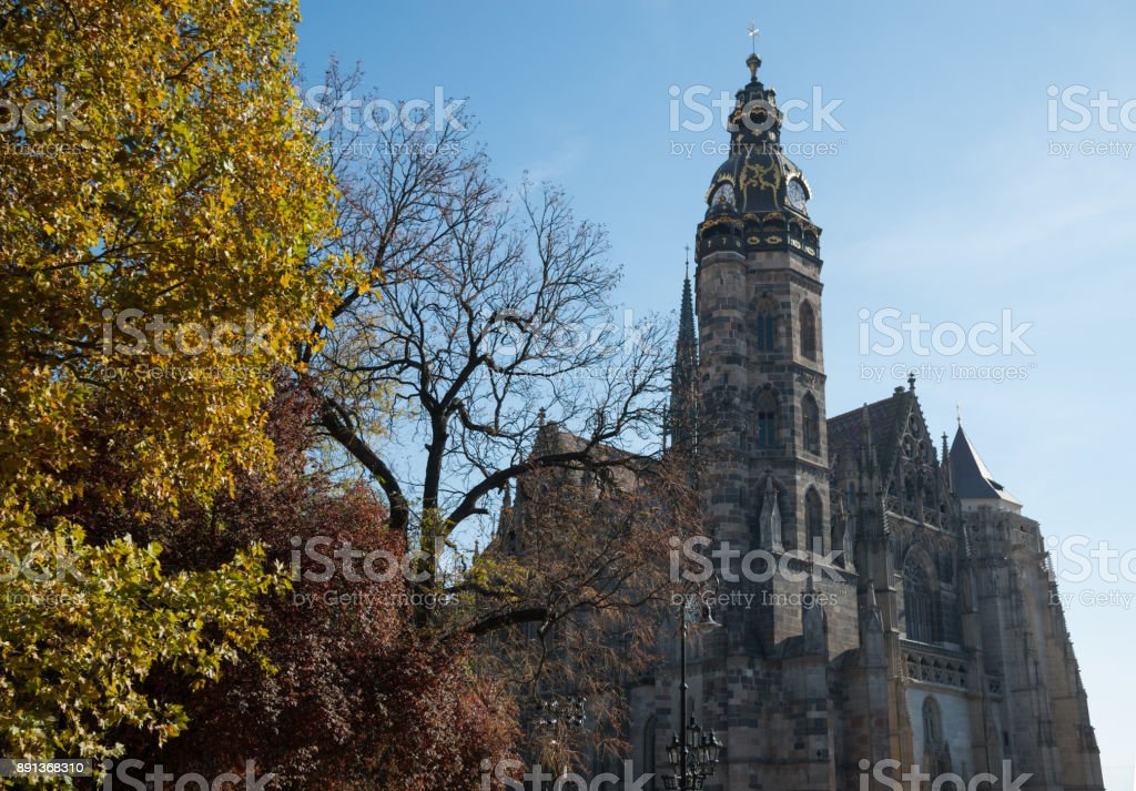 Kosice Cathedral with yellow tree in foreground stock photo