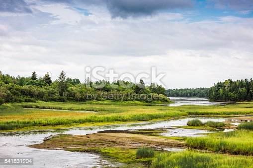 In New Brunswick, a glimpse at the wetland also called marsh or bog, in Kouchibouguac National Park, one of Canada's National parks.