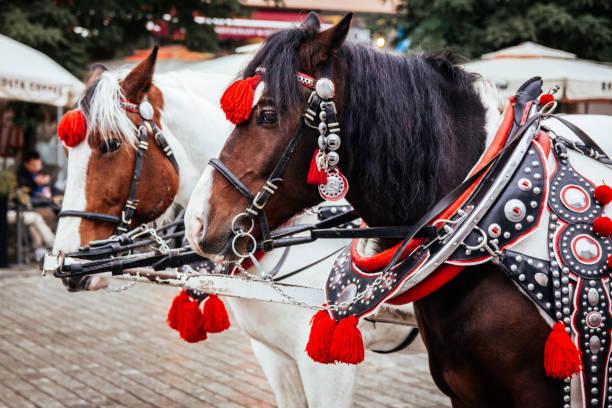 Cracovie, Pologne 19 octobre 2016. Gros plan d'une paire de chevaux sur la place principale de Cracovie, utilisé pour extraire des calèches traditionnelles en plein centre-ville. - Photo