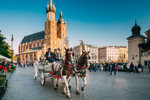Krakow, Poland. Two Horses In Old-fashioned Coach At Old Town Square In Cloudy Summer Day. St. Mary's Basilica Famous Landmark