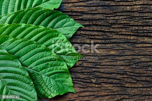 istock Kratom or Mitragyna speciosa leaves isolated on the wood background 928450742