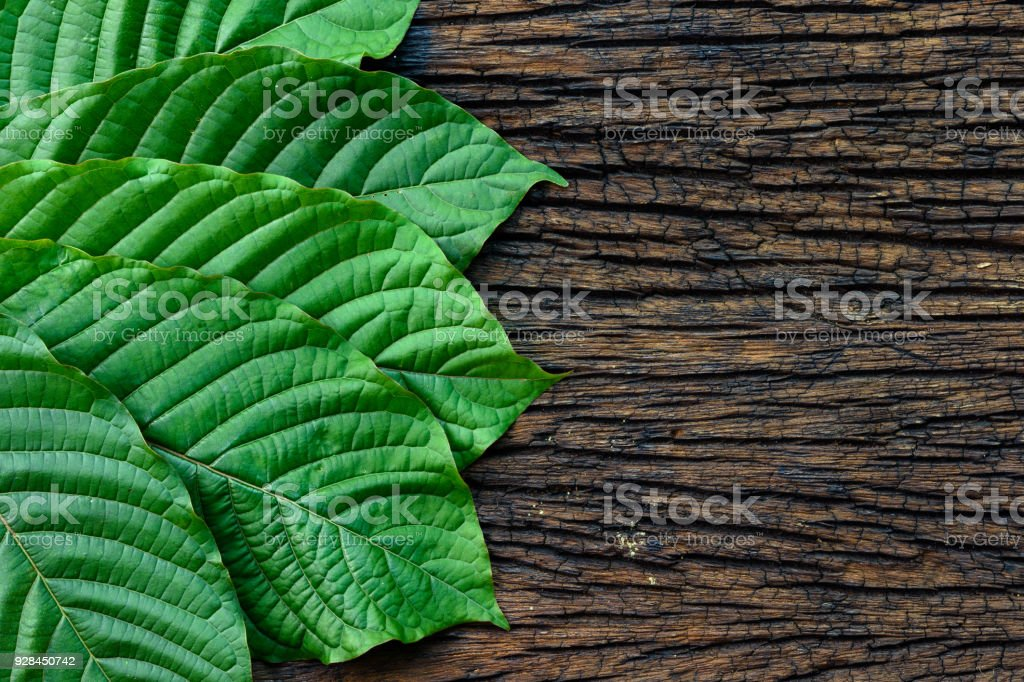 Kratom or Mitragyna speciosa leaves isolated on the wood background stock photo