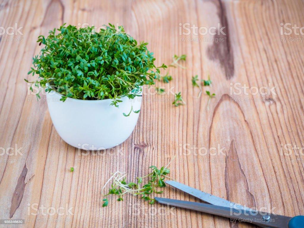 Kresse, Kräuter - foto de stock