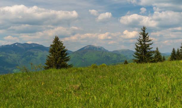 슬로바키아 벨카 파트라 산맥의 마구라 언덕에서 출발하는 크리반스카 말라 파트라 - 벨리카 파트라 뉴스 사진 이미지