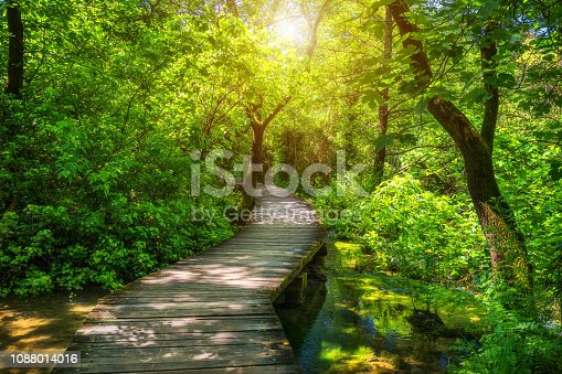 Krka national park wooden pathway in the deep green forest. Colorful summer scene of Krka National Park, Croatia, Europe. Wooden pathway trough the dense forest near Krka national park waterfalls.