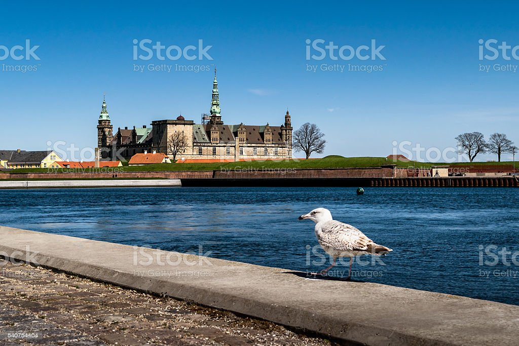 Kronborg Castle in Helsingor with a Seagull stock photo