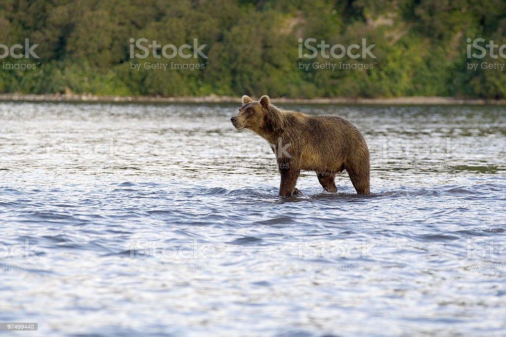 Kronotsky reserve royalty-free stock photo
