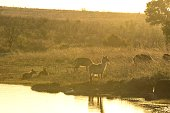 One of the largest game reserves in Africa, situated in South Africa.