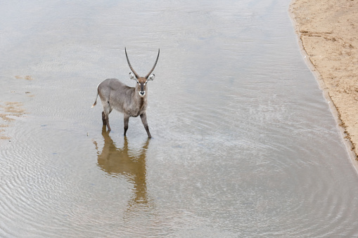 Kruger National Park is one of Africa´s largest game reserve and became South Africa´s first park in 1926