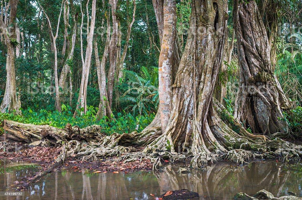Küstenregenwald bei Puerto Viejo (Costa Rica) stock photo