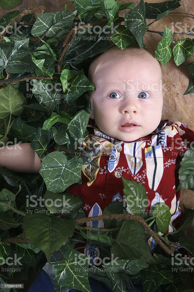 Kudzu Vine Eats Baby royalty-free stock photo