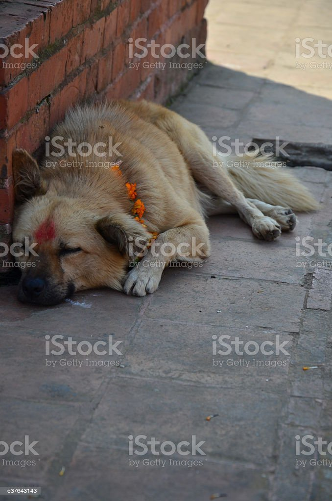 Kukur Tihar or Kukur Puja (worship of the dogs) stock photo